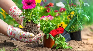 How Gardening Makes You Healthier
